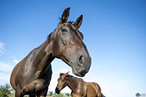 Wallpaper Horse 1ZOOM 2 Animals