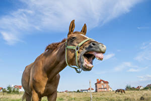 Pictures Horse 1ZOOM Teeth animal