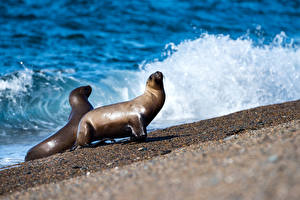Photo Coast Waves Seals Two animal