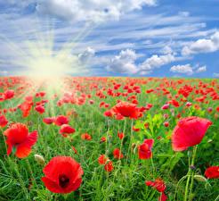 Fotos Acker Mohn Himmel Wolke Sonne Lichtstrahl Blumen