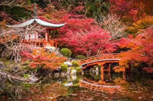壁纸、、日本、ガーデン、池、橋、秋、パゴダ、京都市、木、自然