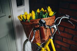 Hintergrundbilder Tulpen Fahrradlenker Weidenkorb Fahrrad Gelb Blumen