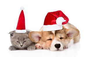 Fotos Neujahr Katze Hund Welpe Kätzchen Mütze Welsh Corgi Schlafen 2