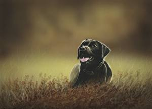 Pictures Dog Painting Art Grass Retriever Tongue Animals