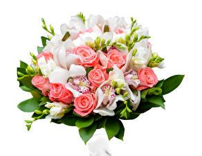 Fotos Sträuße Rosen Orchidee Freesie Weißer hintergrund Blumen