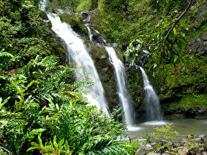 Bilder Wasserfall Vereinigte Staaten Hawaii Laubmoose Ast Natur