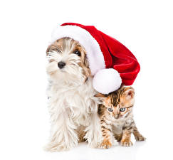Wallpapers Christmas Dog Cat White background Winter hat Yorkshire terrier Kittens animal