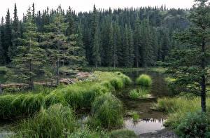Fotos Vereinigte Staaten See Park Wälder Alaska Gras Denali National Park Horseshoe Lake Natur