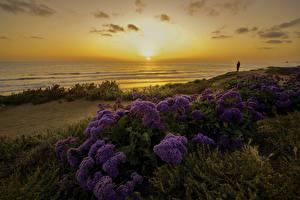 Fotos Vereinigte Staaten Küste Sonnenaufgänge und Sonnenuntergänge Landschaftsfotografie Abend San Diego Sonne Natur