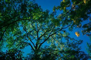 Fotos Ast Untersicht Ansicht von unten Bäume Natur