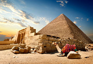 Hintergrundbilder Ägypten Wüste Altweltkamele Steine Pyramide bauwerk Cairo Natur