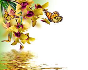Hintergrundbilder Schmetterlinge Monarchfalter Orchidee Wasser Vorlage Grußkarte Blumen