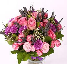 Papel de Parede Desktop Buquês Rosa Dianthus Lavanda Fundo branco Flores