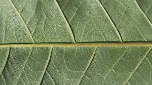 Pictures Texture Closeup Macro Foliage Green Nature