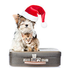 Picture Dogs Cats New year Yorkshire terrier Winter hat Suitcase Kittens White background Animals