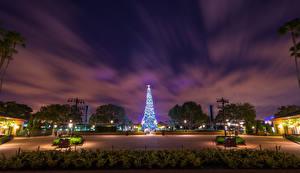 壁纸、、アメリカ合衆国、ディズニーランド、公園、新年、カリフォルニア州、アナハイム、クリスマスツリー、夜、街灯、自然