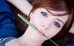 Hintergrundbilder Augen Ähre Starren Gesicht Rotschopf Mädchens