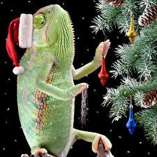 Hintergrundbilder Neujahr Schwarzer Hintergrund Ast Mütze Zapfen Chamäleons Tiere