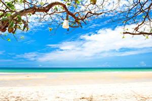 Photo Sky Coast Sea Ocean Beaches Horizon Branches Nature