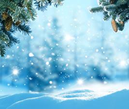 Fotos Jahreszeiten Winter Ast Zapfen Schnee Vorlage Grußkarte Natur