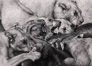 Pictures Big cats Lions Painting Art Canine tooth fangs Black and white Angry Animals