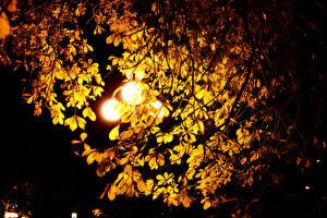 Bilder Kastanien Nacht Straßenlaterne Blattwerk Ast Natur
