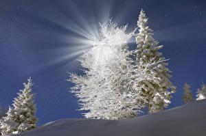 Papel de Parede Desktop Ucrânia Invierno Transcarpátia Picea Neve Raios de luz Naturaleza