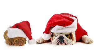 Pictures Christmas Dog White background Bulldog 2 Winter hat Sleep animal