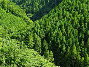 Desktop wallpapers Forest Mountain Green Trees Nature