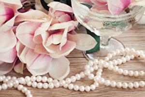 Fotos Perlen Magnolien  Blüte