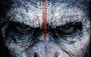 Pictures Monkeys Eyes Dawn of the Planet of the Apes Staring 2014 Movies Animals