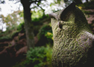 Pictures Owl Sculptures Moss Made of stone