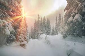 Papel de Parede Desktop Ucrânia Invierno Transcarpátia Neve Picea Raios de luz Naturaleza