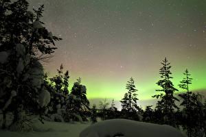 Hintergrundbilder Finnland Lappland Landschaft Winter Himmel Stern Schnee Fichten Polarlicht
