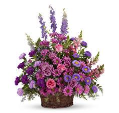 Papel de Parede Desktop Buquê Rosa Asters Dianthus Crisântemos Antirrhinum Fundo branco Cesta de vime flor