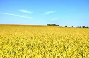 Hintergrundbilder Felder Weizen