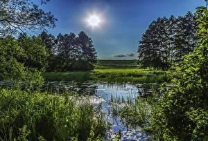 Pictures Ukraine Trees Sun Grass Swamp Poltava
