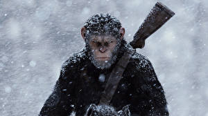 Desktop wallpapers Monkeys Shotgun Dawn of the Planet of the Apes Snow 2014 film