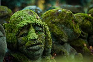 Wallpapers Sculptures Closeup Moss Head