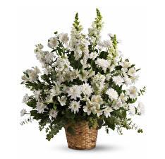 Hintergrundbilder Sträuße Alstroemeria Chrysanthemen Löwenmäuler Weißer hintergrund Weidenkorb Weiß
