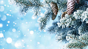 Pictures Winter Branches Pine cone Snow Nature