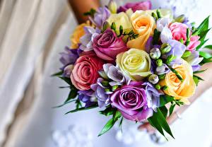 Hintergrundbilder Blumensträuße Rosen Freesie Blumen