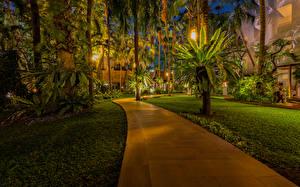 壁纸、、タイ王国、公園、熱帯、ヤシ、街灯、芝、歩道、Pattaya、自然