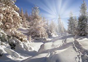Papel de Parede Desktop Invierno Neve Raios de luz Picea Naturaleza