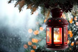 Bilder Großansicht Kerzen Laterne Ast
