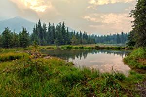 Hintergrundbilder Alaska Park See Wälder Gras Denali National Park Horseshoe Lake Natur