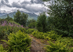 Picture Alaska Parks Mountains Shrubs Clouds Chugach National Forest Nature
