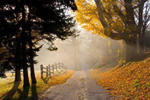 Images Autumn Parks Roads Trees Fog Fence Nature