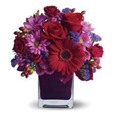 Fotos Sträuße Gerbera Rose Chrysanthemen Weißer hintergrund Vase Blumen