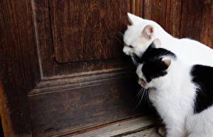 Bilder Katzen 2 Tür ein Tier